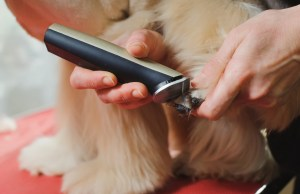best cordless pet clippers for dogs