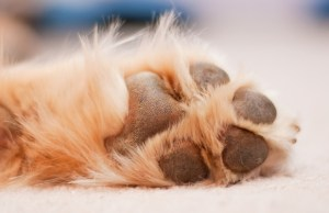 best paw protection wax for dogs