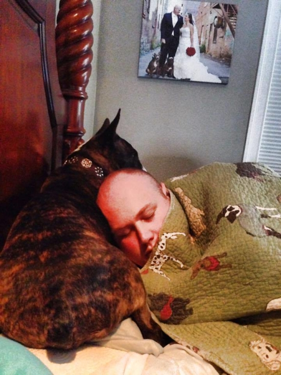 Dog Parents Build Enormous Bed to Sleep 8 Rescue Pups