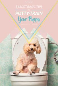 Basic Tips for Potty Training a Puppy