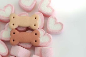 Benefits of marshmallows for dogs