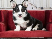 Best Dog Sofas and Chairs