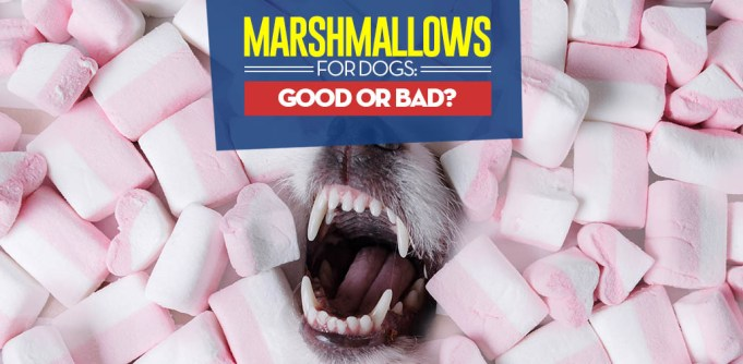 Can I give my dog marshmallows