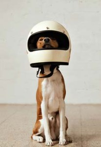 Ensure the safety of your dog with the right supplies