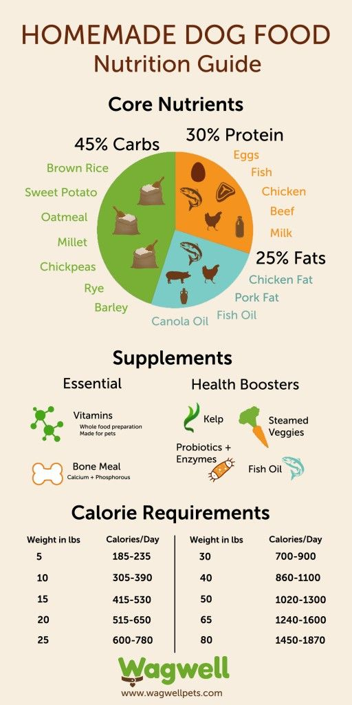 Homemade dog food nutrition guide infographic