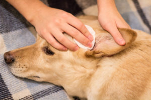 How to Groom a Dog: The Largest Free Course for Beginners ...