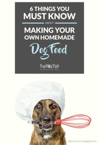 Must-Know Tips for Making Your Own Homemade Dog Food