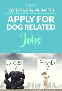 Quick Tips On How to Apply for Dog Related Jobs