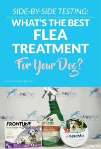 The Best Flea and Tick Treatments for Dogs Test