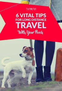 Tips for Long Distance Traveling with Your Dog