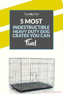 Top Best Heavy Duty Dog Cages Indestructible Dog Crates