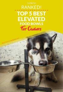 Top Best Raised Dog Food Bowls