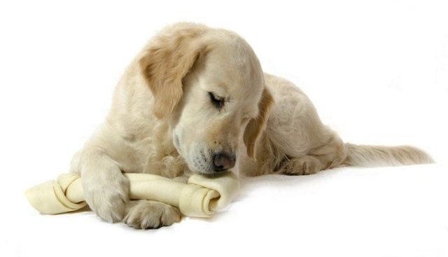 What are the Best Dog Rawhide Treats?