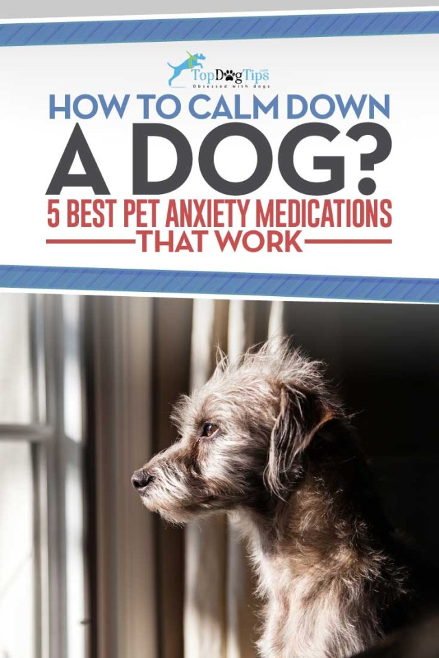 12 Best Dog Anxiety Medications