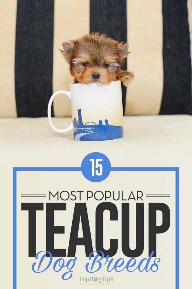 15 Popular Teacup Dog Breeds