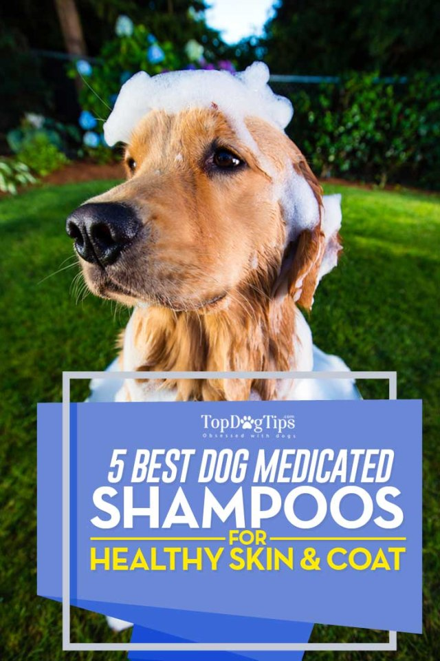 Best Medicated Dog Shampoo Brands for Healthy Skin and Coat