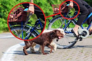 Bike riding with dogs safety