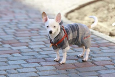 Calming Collars, T-Shirts, Coats, Vests for Anxiety in Dogs
