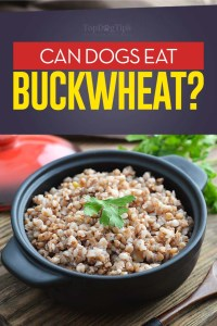 Can Dogs Eat Buckwheat