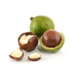Can I give my dog macadamia nuts?