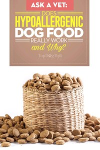 Does Hypoallergenic Dog Food Really Work