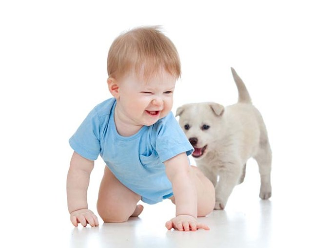 Dogs Are Like Human Toddlers More than Monkeys