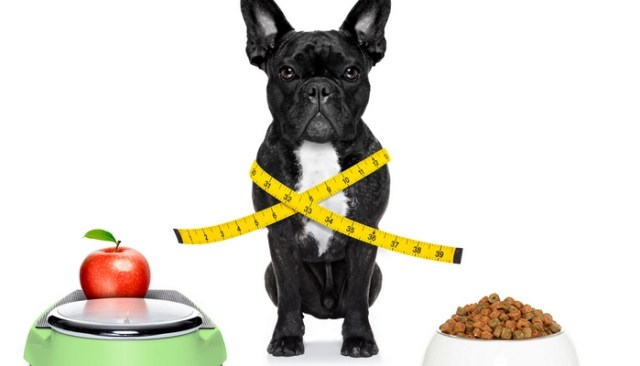 How To Know Which Dog Food Is Right
