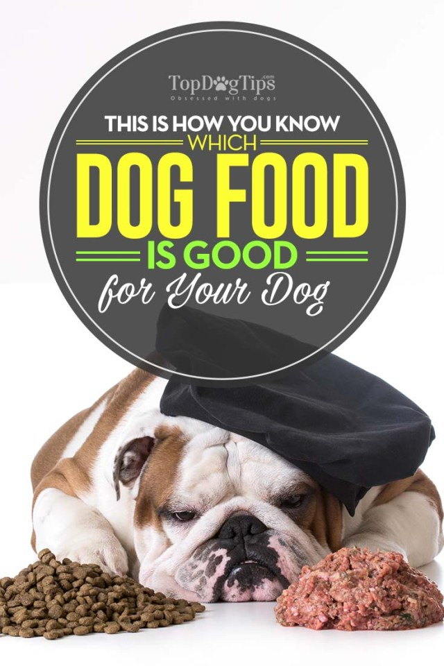 How to Know Which Dog Food is Good for Your Dog