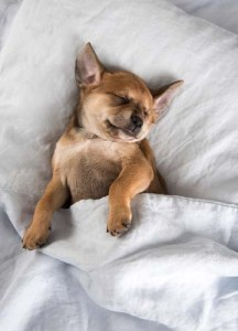 Let a sleeping dog lie