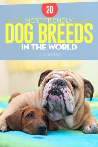 Most Friendly Dog Breeds in the World