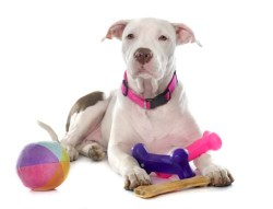 Pick the right size dog toys