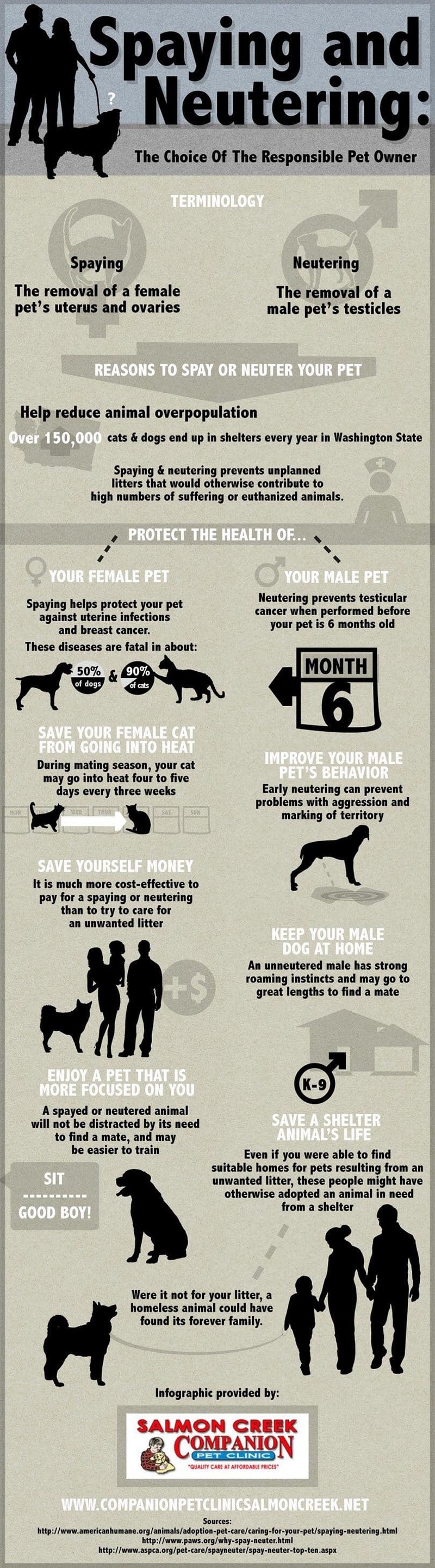Spay or Neuter Dog Graphic