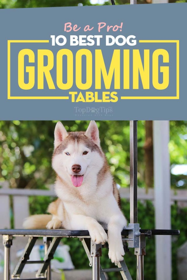 Top Rated Best Dog Grooming Tables