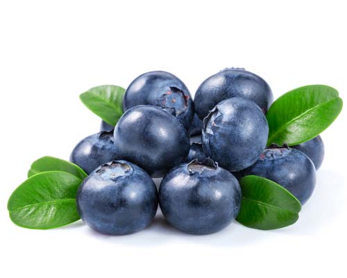 What do blueberries look like