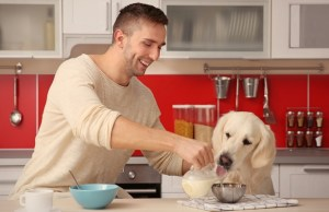 best dog food toppings