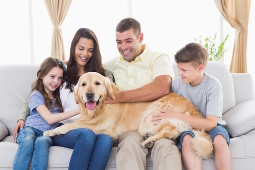 Golden Retriever as most friendly dog breeds
