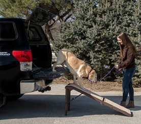 Pet Gear Pet Ramp
