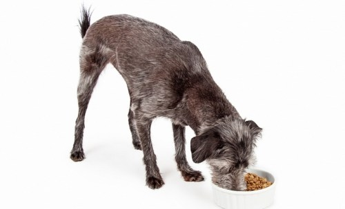 How to Choose The Best Dog Food for Arthritis