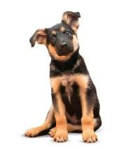Best German Shepherd Puppy Food