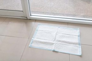 Finding the best dog pee pads for toilet training
