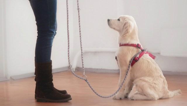 How to train an urban dog