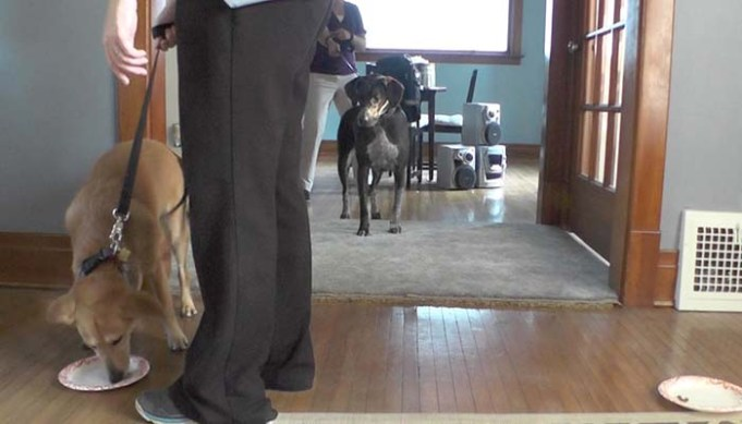 Study Shows Which Dogs Think Independently
