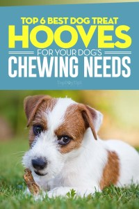 The Best Dog Treat Hooves for Chewing