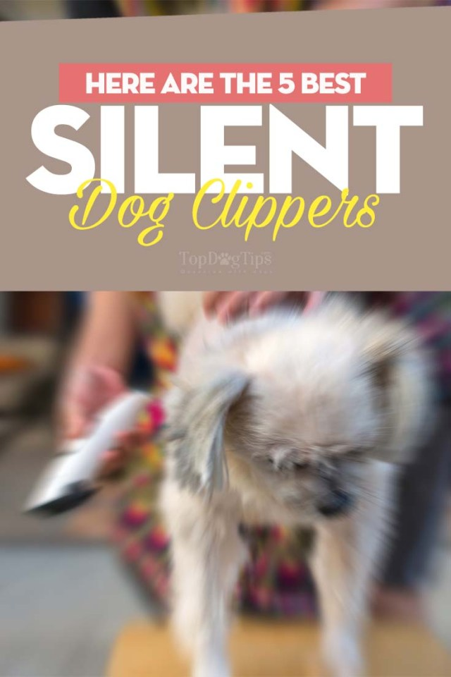 The Best Silent Dog Clipper Brands