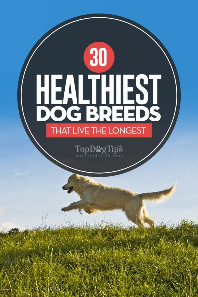 The Healthiest Dog Breeds That Live the Longest