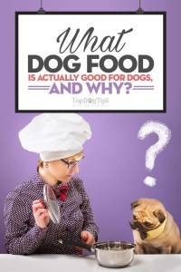 What Dog Food Is Good for Dogs