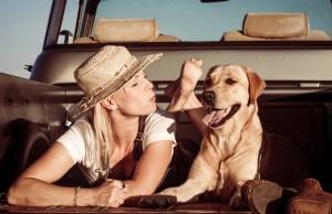 most travel friendly dog breeds