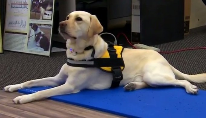 Dogs Can Now Call 911 For Emergencies