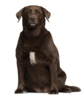 How do you assess your dog's body condition?
