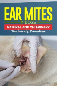 The Guide on Ear Mites in Dogs